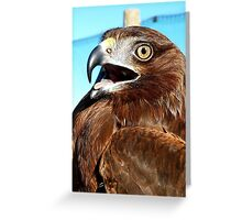 All I Need Is Time... Horatio - Harrier Hawk - NZ Greeting Card