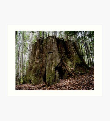 photoj Tas Liffy Falls Reserve Art Print