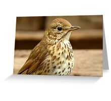 I'm As Beautiful As My Song Is..! - Song Thrush - NZ Greeting Card