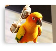 "I'm Backpacking On The ""Cheep""!!!- Sunconure - NZ Canvas Print"