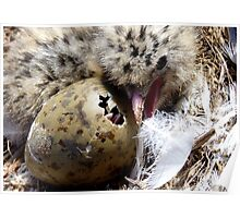 Come on Pip, You Can Do It, I Did It! - Baby Seagull Hatching! - NZ Poster