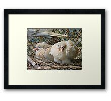 Bob... I Can't Wait To Grow Up!! - Baby Collard Doves - NZ Framed Print