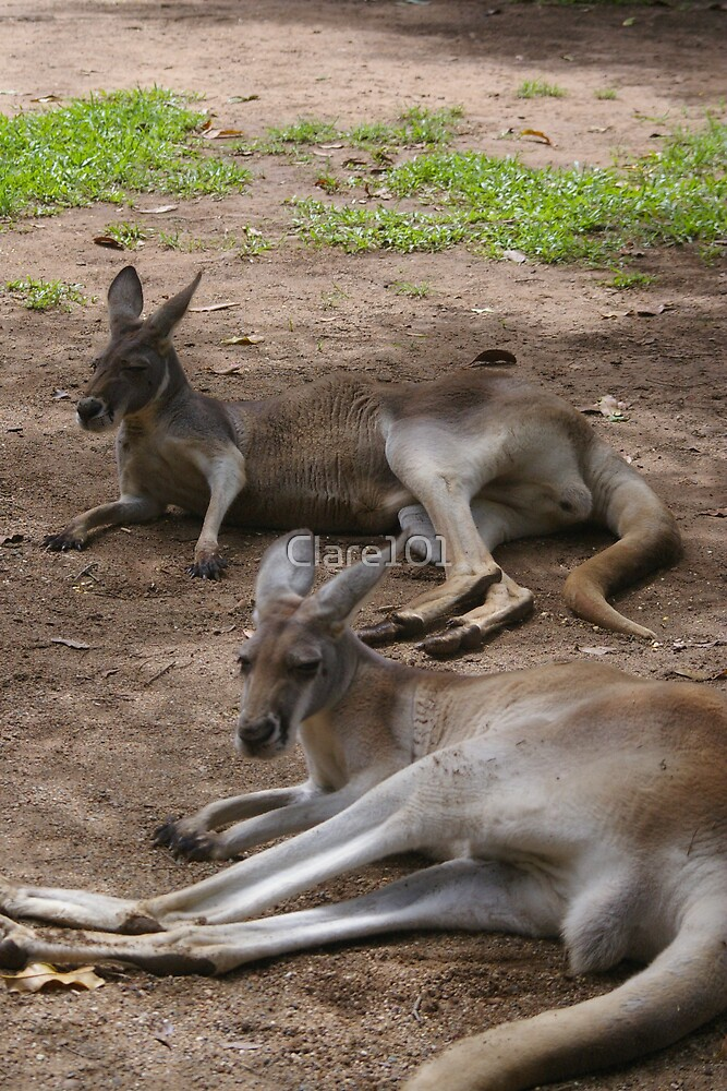 Lazy Roos by Clare101