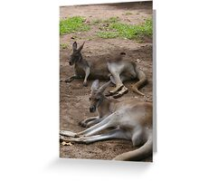 Lazy Roos Greeting Card