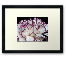 Carnation... Framed Print