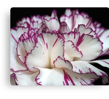 Carnation... Canvas Print