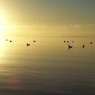 Paddle to the light!!!   On the bay at Strahan by gaylene