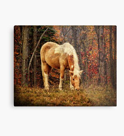 Buckskin Horse in Autumn Metal Print