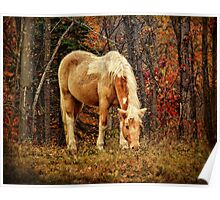 Buckskin Horse in Autumn Poster