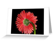 Red Gerbera Daisy Greeting Card