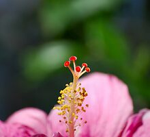A photo of a Azalia flower 002 by wbgraphy