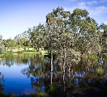 Trees reflected at Dunkeld Community Park, Victoria by Elana Bailey