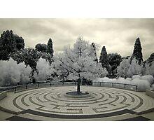 The White Tree of Gondor Photographic Print
