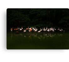 Pinks and Whites Canvas Print