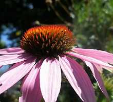 Pink Daisy by Shannyn