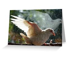 Have You Ever Seen The Rain - White Dove - NZ Greeting Card