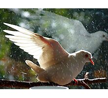 Have You Ever Seen The Rain - White Dove - NZ Photographic Print