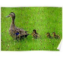 Come on Kids Move Along! - Mallard Ducks - NZ Poster