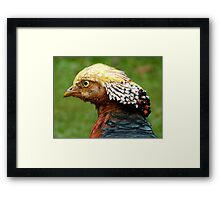 Bob Marley Look Alike! - Golden Pheasant - NZ ** Framed Print