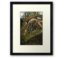 Green and furry Framed Print