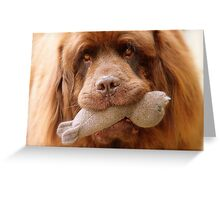 Pleeeese! come play with us - Big Doggy - NZ Greeting Card