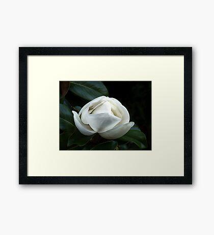Magnolia Blossom 4 Framed Print