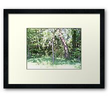 Looking Upward in our Sycamore trees. Framed Print
