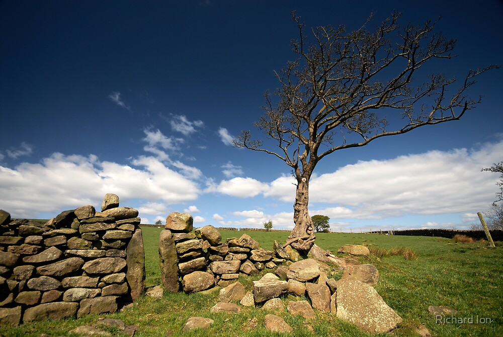 Yorkshire Tree by Richard Ion