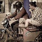 Impassible Caniche by Cvail73