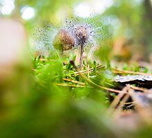 hairy mushrooms by novopics