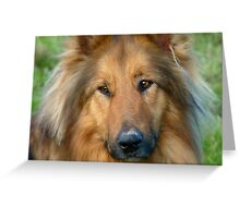 Dreaming Of My Wee Lassie! - Cross Mix Collie Dog - NZ Greeting Card