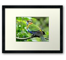 Is Someone Going To Feed Me!  - Baby Rosella - NZ Framed Print