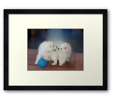 Hey... That's My Tail In Your Mouth... - Puppy's - NZ Framed Print