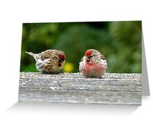 His & Hers! - Redpoll - NZ - Southland Greeting Card