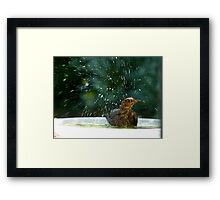 I Like To Stay In Tip-Top Condition - Blackbird Bathing - NZ Framed Print