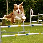 I Believe I Can Fly... I Believe... - Border Collie - NZ by AndreaEL