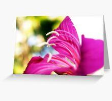 flower bokeh. Greeting Card