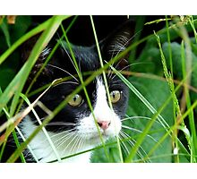 Thats One Mighty Big Fowl! - Kitten - NZ Photographic Print