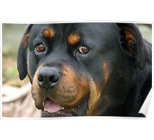 Devoted! - Rottweiler - Dog - NZ Poster