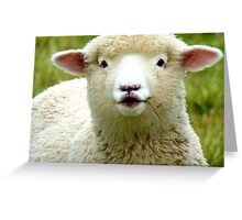 Oooh! La La... - Baby Lamb - Sheep - NZ Greeting Card