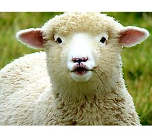 Oooh! La La... - Baby Lamb - Sheep - NZ Photographic Print