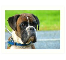 Beautiful Jowls! - Boxer Dog - NZ Art Print