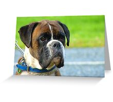 Beautiful Jowls! - Boxer Dog - NZ Greeting Card