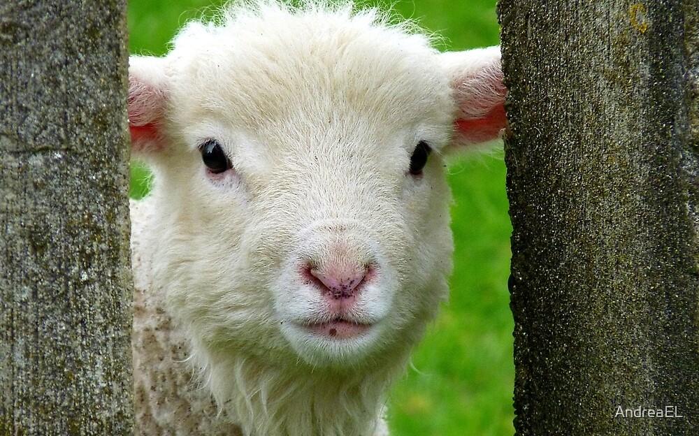 Hi Bubbler's - Lamb - NZ - Southland by AndreaEL