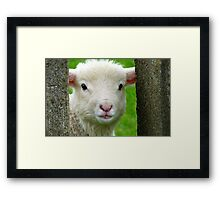 Hi Bubbler's - Lamb - NZ - Southland Framed Print