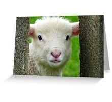 Hi Bubbler's - Lamb - NZ - Southland Greeting Card