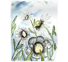 field of white daisy flowers daisies Poster