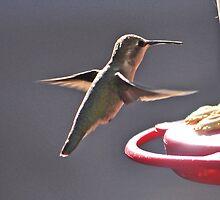 HUMMINGBIRD ANNA'S ON WAY TO FEEDER PERCH by JAYMILO