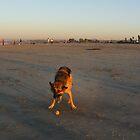 Dog Beach by Timoteo Delgado