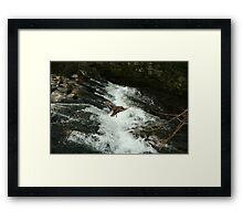 flying duck over water Framed Print
